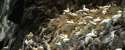 Image of the Day: Plastic Nests