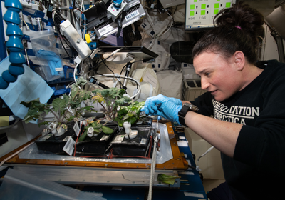 Space-Grown Lettuce Is Safe and Astronaut-Approved