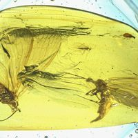 Image of the Day: Scorpionfly Fossils