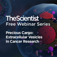 Precious Cargo: Extracellular Vesicles in Cancer Research