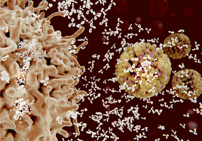 Monkeys Develop Protective Antibodies to SARS-CoV-2