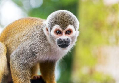 US Primate Centers Work to Protect Animals from COVID-19