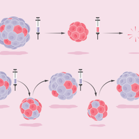 Infographic: Researchers Take Aim at Cancer Evolution
