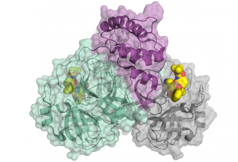 https://cdn.the-scientist.com/assets/articleNo/67315/iImg/36729/uploads/coronavirus%203d.jpg