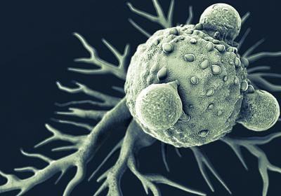 Flu Shot Ignites Immune Attack Against Cancer in Mice