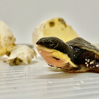 Image of the Day: Rescued Hatchlings