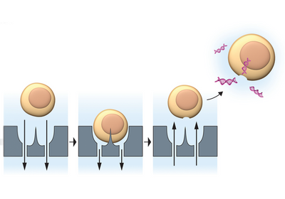 Infographic: Transfection by Precision Cell Piercing
