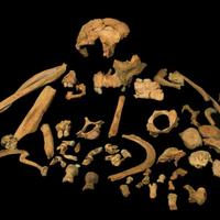 日图:古老的牙釉质