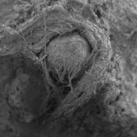 日的图像:古老的纤维技术