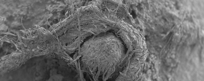 Image of the Day: Ancient Fiber Technology