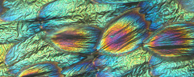 Image of the Day: Structural Colors