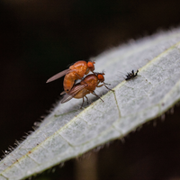 Light Enables Long-Term Memory Maintenance in Fruit Flies
