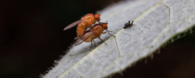 Light Enables Long-Term Memory Maintenance in Fruit Flies