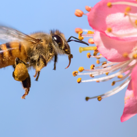 Once Is Enough For Long-Term Memory Formation in Bees