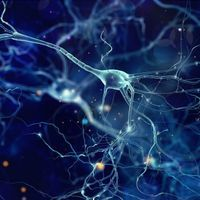 Deep Brain Optogenetic Control Without Implants
