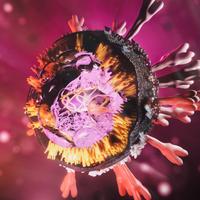 SARS-CoV-2 Protein Hampers Innate Immune Reaction In Vitro