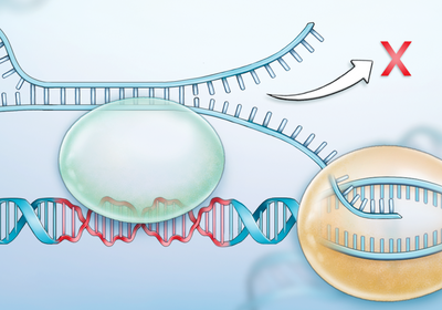 Infographic: DNA Isn't Always Right-Handed