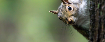 How Squirrels Use Bird Chatter to Assess Safety