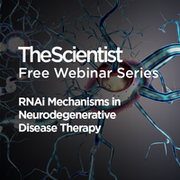 RNAi Mechanisms in Neurodegenerative Disease Therapy