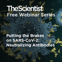 Putting the Brakes on SARS-CoV-2: Neutralizing Antibodies