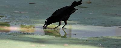 Innovative Birds Face a Lower Risk of Extinction