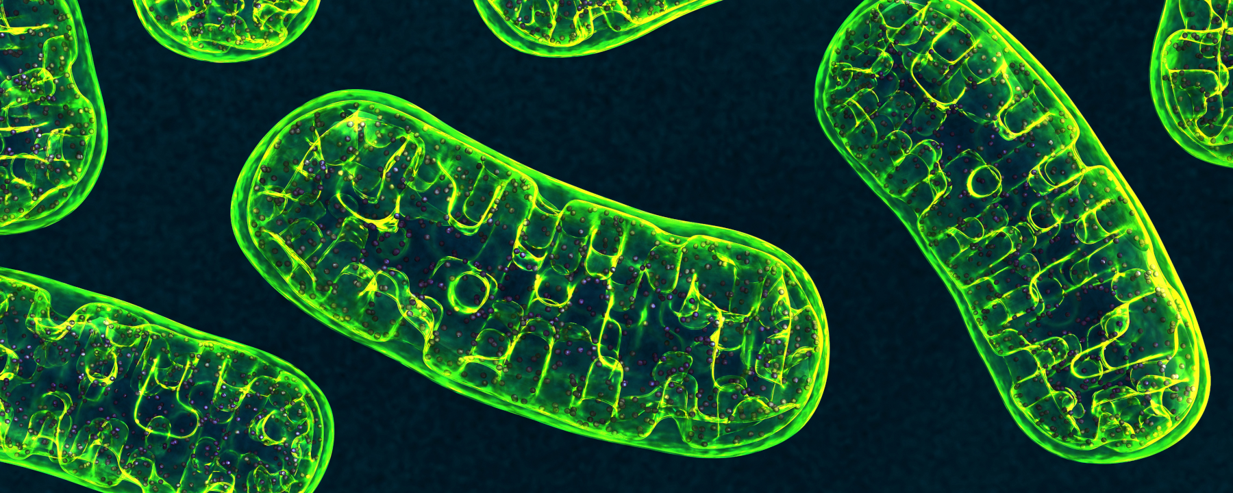 New Gene Editing Tool Corrects Mutations in Mitochondrial DNA