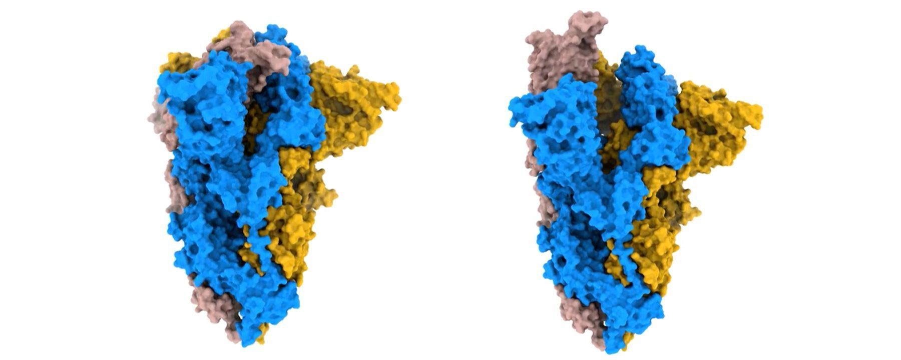 Spike Structure Gives Insight into SARS-CoV-2 Evolution