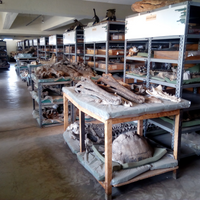 Initiative Seeks to CT Scan Kenya's Unexplored Fossil Trove