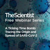 一个定时炸弹:追踪SARS-CoV-2的起源和传播