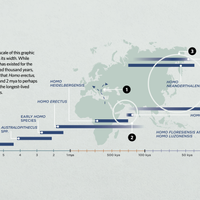 Infographic: Meet Your Ancient Ancestors and Relatives in Africa