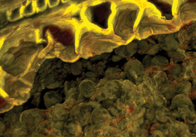 Ancient Grains Hint at Prehistoric Beer Brewing
