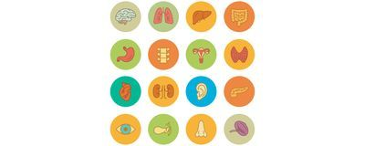New Map Charts Genetic Expression Across Tissue Types, Sexes