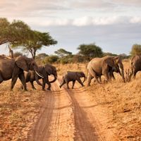 Mass Elephant Die-Off Caused by Cyanobacteria, Officials Say