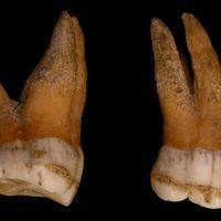 早期现代人的Y染色体取代了尼安德特人的Y染色体