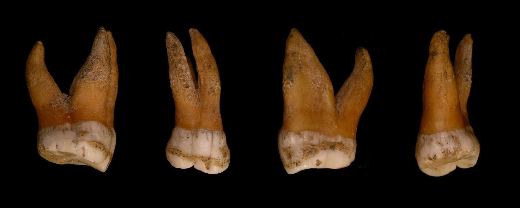Y Chromosome from Early Modern Humans Replaced Neanderthal Y