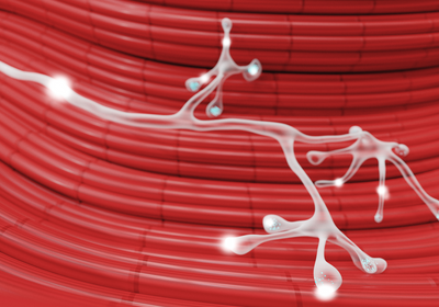 Neural Connections Bolstered in Monkeys That Lift Weights