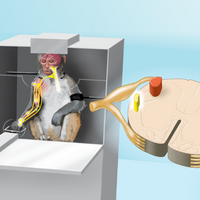 Infographic: How Weight Lifting Changes Monkeys' Neural Connections