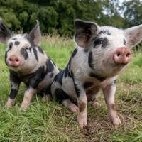 大多数受访者支持嵌合动物研究:调查