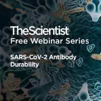 SARS-CoV-2 Antibody Durability