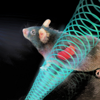Electric and Magnetic Field Treatments Lower Mouse Blood Sugar