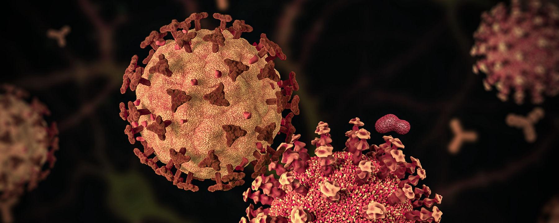 Decoy Cells Trick SARS-CoV-2, Reduce Cytokines In Vitro