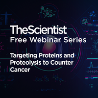 Targeting Proteins and Proteolysis to Counter Cancer