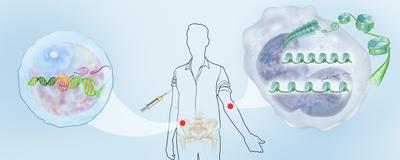 Infographic: How Vaccines Train Innate Immunity