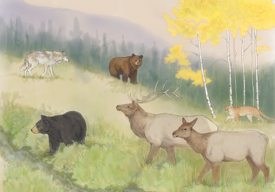 Infographic: How Large Carnivores Sculpt Ecosystems