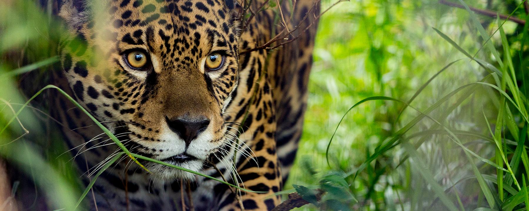 Slideshow: How Ecologists Study the World's Apex Predators