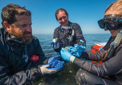 Microbes Find Their Niche in Underwater Shipwrecks