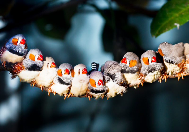 finches-1800x1260-m