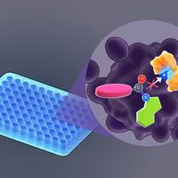 信息图:光触发光笼子打开,细胞凋亡抑制