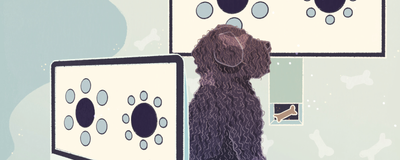 Infographic: What Do Dogs Perceive?