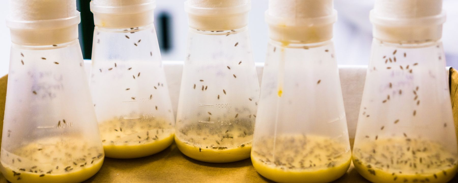 Insects Pass Antiviral Immunity to Offspring